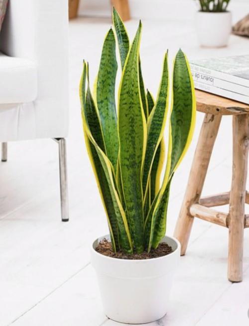 風水 観葉 植物