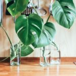 [邪気払い風水] トイレに置きたい5つの観葉植物
